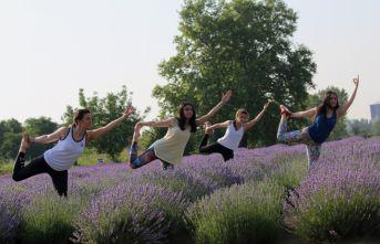 Lavanta tarlasında Yoga yaptılar