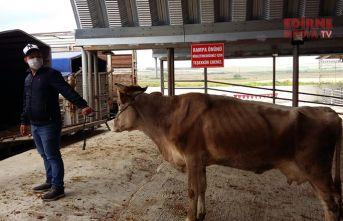 Canlı hayvan pazarı açıldı