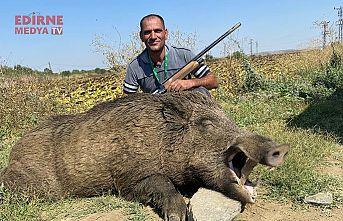 280 kiloluk yaban domuzu avladı