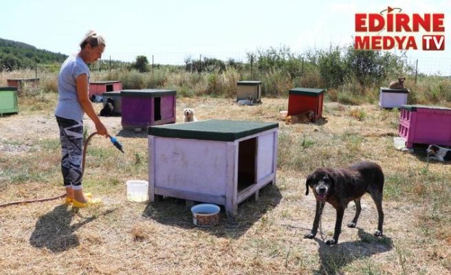 Hasta ve yaşlı köpeklerin gönüllü bakıcısı