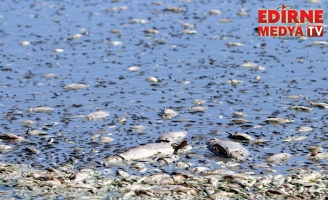 Balıklar için tankerle su taşınıyor