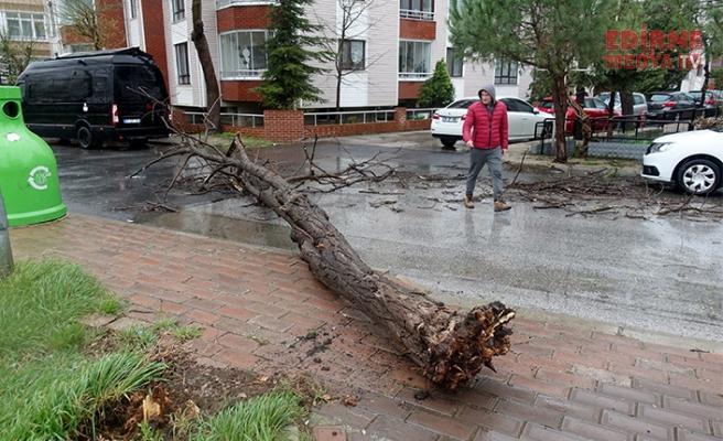 Ağaçlar devrildi, apartmanın çatısı uçtu