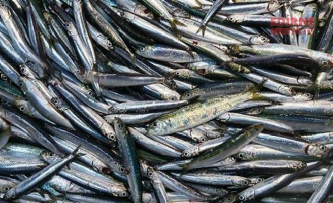 Korona Virüs Balıkları kurtardı