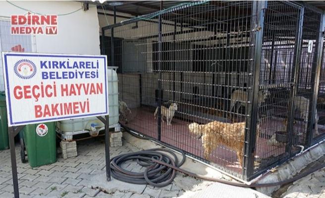 Köpekleri katleden şüpheliler tespit edildi