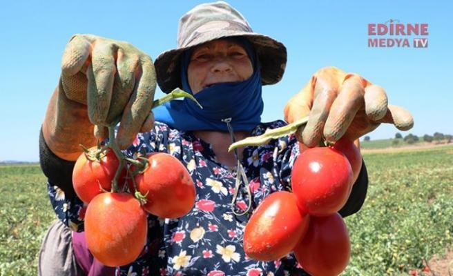 En lezzetli domateste hasat zamanı