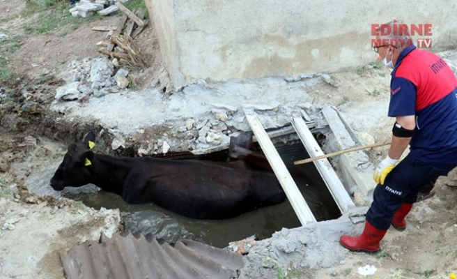 Kanalizasyon çukuruna düştü