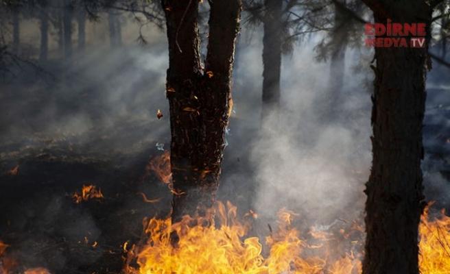 Ormanlarımız yanıyor