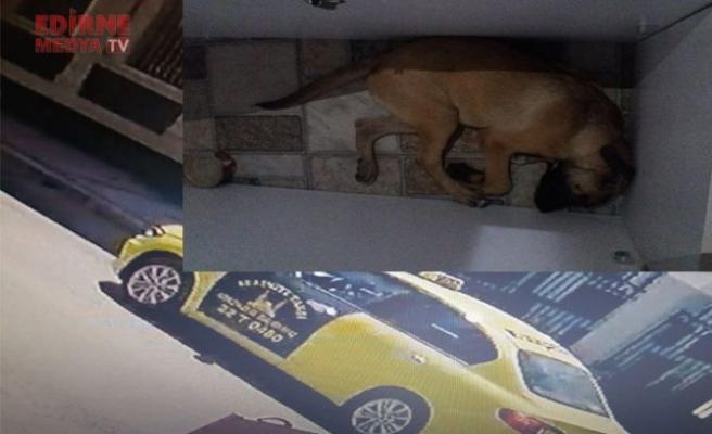 Köpeği için hukuk mücadelesi veriyor