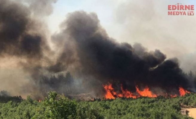 Orman yangını sona erdi