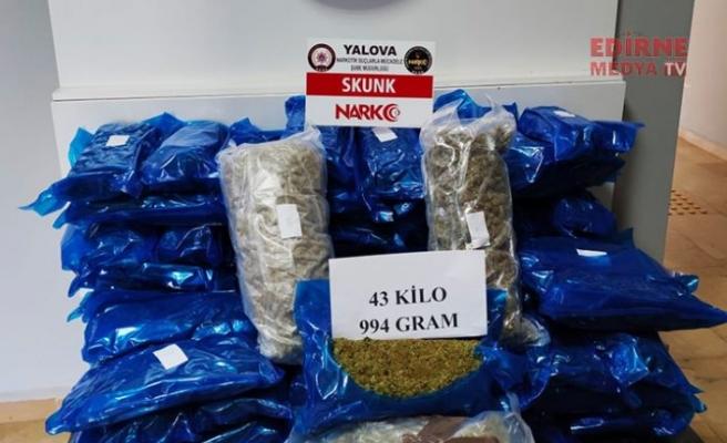 44 kilogram skunk ele geçirildi