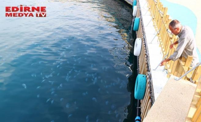Balık azalıyor, denizanası artıyor