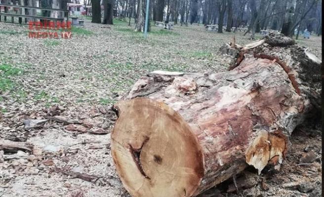 Söğütlükte ağaçlar neden kesildi?