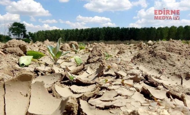 Trakya'da kuraklık korkutuyor