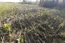 Hortum çiftçiyi zarara uğrattı