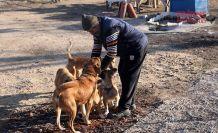Evin bahçesini sokak köpeklerine açtı