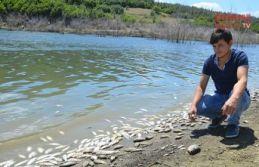 Balıklar neden öldü?