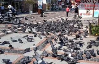 Saraçlar caddesi güvercinlere kaldı