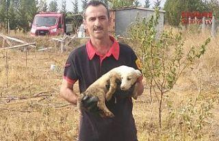 Yavru köpeği itfaiye kurtardı