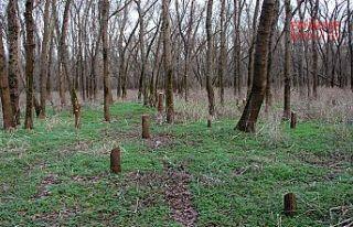 Tavuk Ormanında ağaç kesenlere inceleme