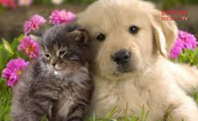 Evcil hayvanlara pasaport ve mikroçip zorunluluğu