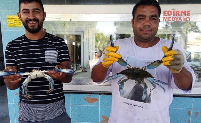 Balıkçıların geçim kapısı oldu